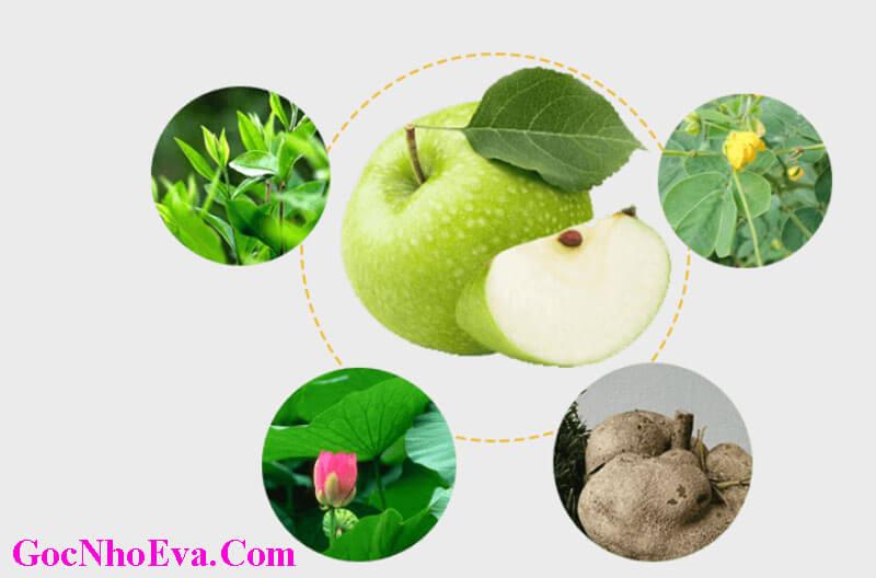 Thành phần chính của Viên giảm cân Hoa Bảo