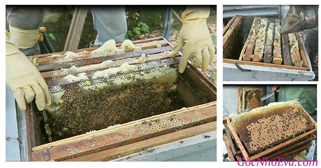 Mật ong hoa cà phê Bảo Hân có tốt không