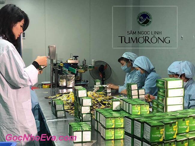 Quy trình sản xuất trà sâm Ngọc Linh